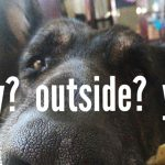 """Bring your dog to """"Yappy Hour"""" at the Benton Dog Park March 4th"""