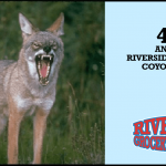 4th Annual Statewide Coyote Hunt Is February 18th