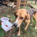 Male Dog Found on Highway 70