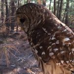 Saline County Deputy Returns Grieving Owl to Nature