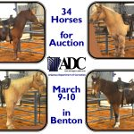 ADC to Host Auction of 34 Horses March 9-10