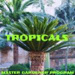 Master Gardeners to Present Program on Tropicals June 4th
