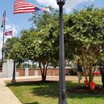 Sometimes, Even Trees Need a Bath – Scrubbing Crape Myrtles at the Courthouse