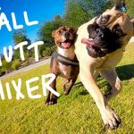 Free Off-Leash Mutt Mixer Planned in Bryant